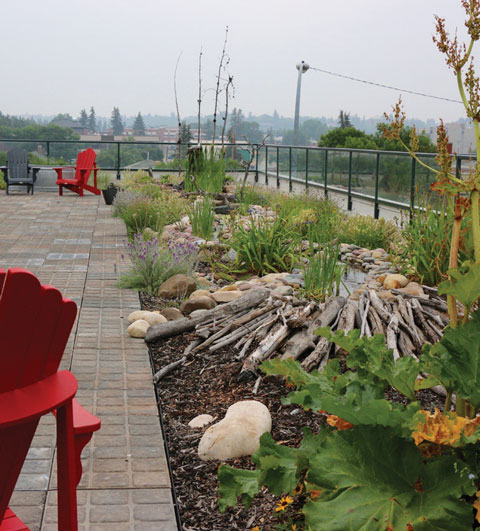 The berry Architecture and Associates green roof in downtown Red Deer.